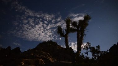 Astrophotography Time Lapse Joshua Tree under Moonlight — Stock Video