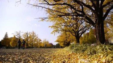 Mensen lopen via geel ginkgo bomen in japan — Stockvideo