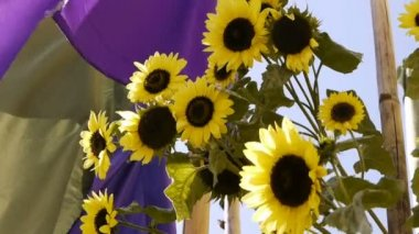 Sunflower and Flags — Stock Video
