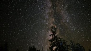 Milky Way Galaxy over Alpine Forest — Stock Video