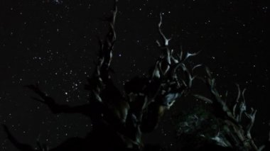 Stars over Ancient Bristlecone Pine — Stock Video