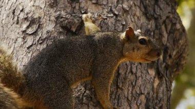 Squirrel — Vídeo de Stock