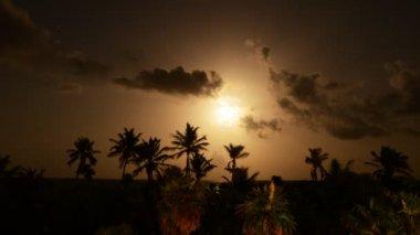 Tropical Moon Nigh — Stock Video