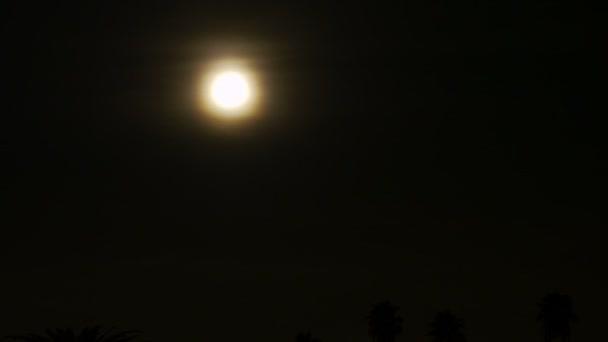 Puesta de la luna llena en palmera. — Vídeo de stock