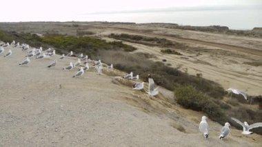 Seagulls on Cliff Edge — Stock Video