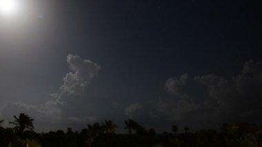 Tropical Moon — Stock Video