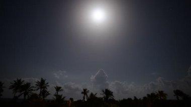 Tropical Moon Light Night — Stock Video