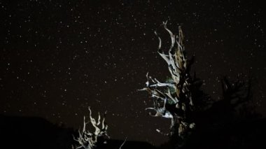Star Trails over Ancient Bristlecone — Stock Video