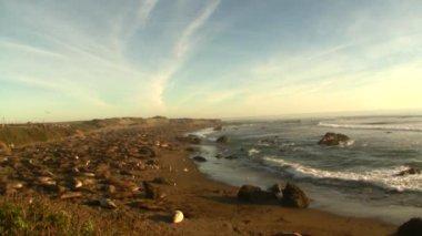 Elephant Seal Beach — Stock Video