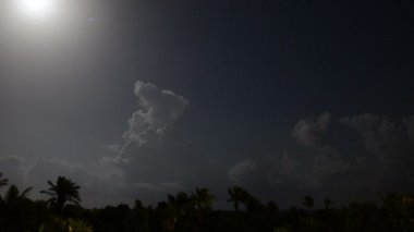 Moon night in tropical jungle of Yucatan Peninsula — Stock Video