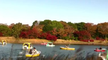 Japanese Maple Trees by pond with boats — Stock Video