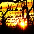 Vineyard Sunset. — Wideo stockowe #43510045