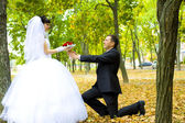 Groom gives to the bride flowers — 图库照片