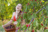 Young girl in garden with a sweet cherry basket — Stock Photo