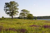Summer landscape — ストック写真