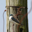 Songbird and tangled wire — Stock Photo