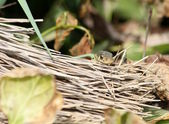 Garter snake and broom — Stock Photo