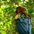 Macaw — Stock Photo #41170645