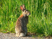 Goofy rabbit 1 — Stock Photo