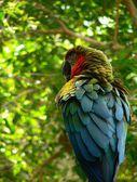Macaw — Stock Photo