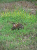 Bunny in grass — Stock Photo