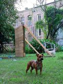 Dog and rundown building — Stock Photo
