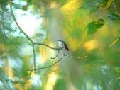 Zen hummingbird — Stock Photo
