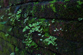 Plant on old wall close up — Stock Photo