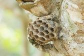 Deserted wasp's nest  — Stock Photo