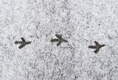 Background. thawing ice on asphalt. traces of a bird. — Stock Photo
