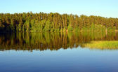 Forest Lake landscape — Stock Photo