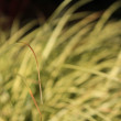 Stock Photo: Yellowish green grass