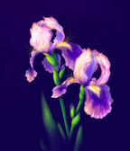 Iris Flowers Isolated — Foto Stock