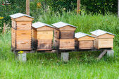 Wooden hives — Stock Photo
