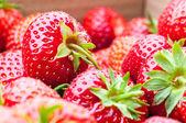 Organic Berries Closeup — Stock Photo