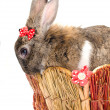 Easter bunny sitting in a baske — Stock Photo