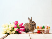 Easter bunny and eggs on wooden floor — Stock Photo