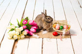 Easter bunny and eggs on wooden floor — Photo