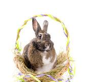 Sepet içinde oturan paskalya tavşanı — Stok fotoğraf