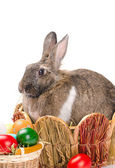 Easter bunny sitting in basket — Stock Photo