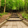Rising trail in the woods — Stock Photo #41760447