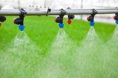 温室灌溉系统在行动 — 图库照片