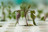 Young seedlings in tray — Stock Photo