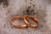 Wedding rings on the background dandelions — ストック写真