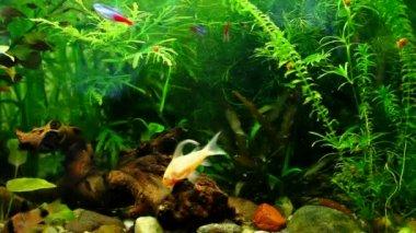 Exotische fische im aquarium — Stockvideo