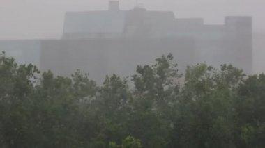 Monsoon rains — Stock Video