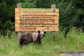 Wild bear in front of a wood sign — Foto Stock