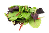 Mixed salad baby red leaf, baby spinach & red chard isolated on white — Stok fotoğraf