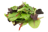 Mixed salad baby red leaf, baby spinach & red chard isolated on white — Stock Photo