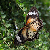 Beautiful butterfly on natural background — Stock Photo